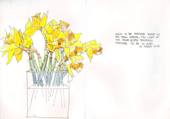 daffodils - 19 March 2015